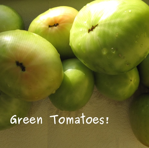 A photo of Green Tomatoes