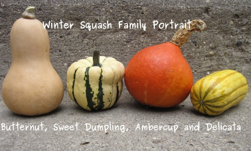 Winter Squash Family Portrait