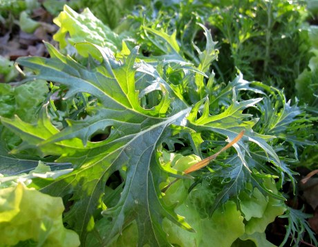 A photo of the leafy greens