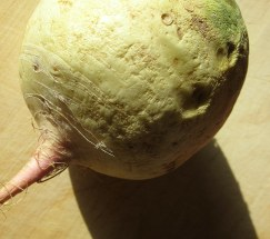 A photo of the radish