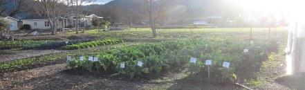 A photo of the garden