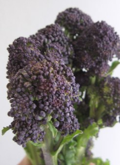 A photo of purple sprouting broccoli
