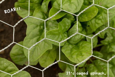 A photo of the spinach