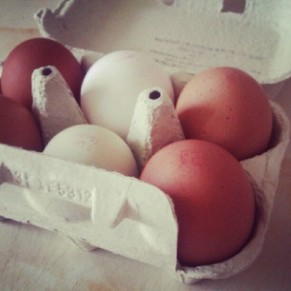 A photo of the eggs