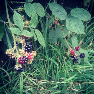 A photo of blackberries