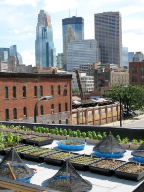 Photo of Rooftop Garden at The Bachelor Farmer