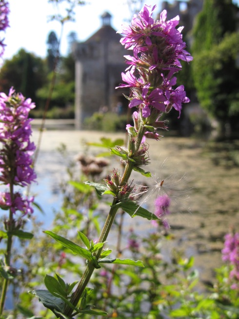A photo of a flower and the castle
