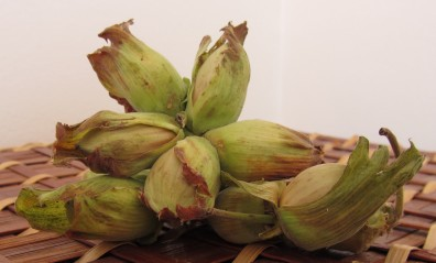 A photo of cobnuts
