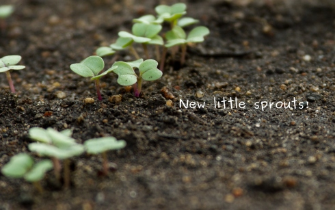 Photo of new little sprouts