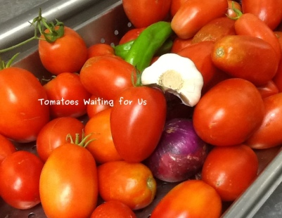 Photo of Tomatoes Waiting to Be Processed