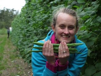 a photo of runner beans