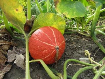 a photo of squash