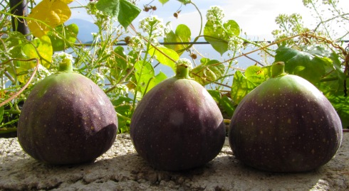 A photo of figs