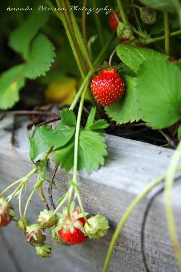 Photo of Berry